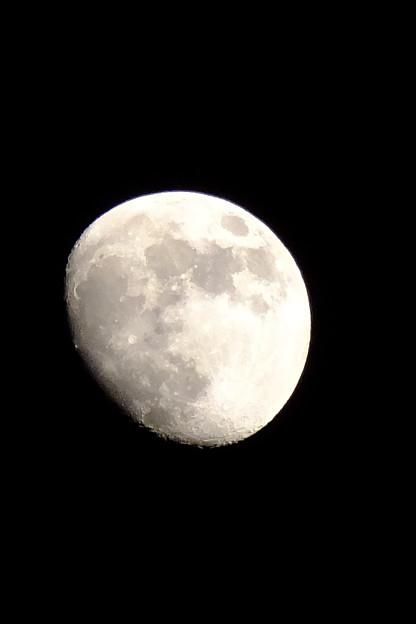 本日の月、月って日によって平らに見えたりボコボコに見えたりするのって気のせい?おそらくわたくしの気のせいでしょう!!