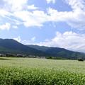 空   雲    風   蕎麦