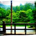 大本山天龍寺の池
