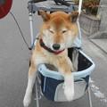 Photos: 箱乗り!?