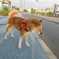 Photos: ノロノロでも・・・