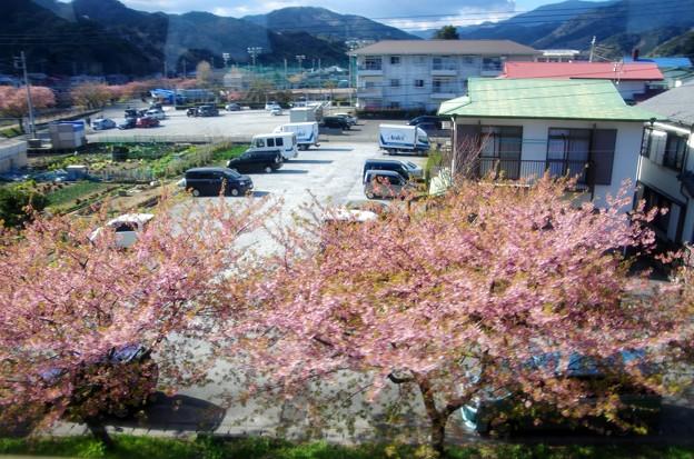 写真00028 すっかり葉桜で、先週までの顕騒はいずこ