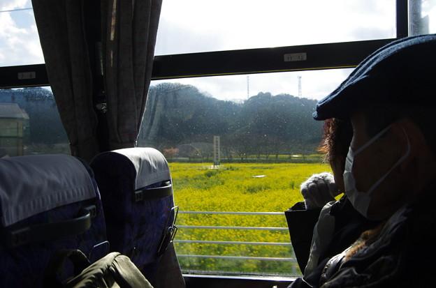 写真00040 とても広い菜の花畑が、南伊豆町