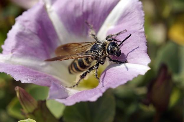 花粉をつけて