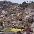 花見山周辺