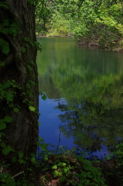 桧原湖の木陰