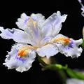 写真: 花の名前も知らずにm(_)m