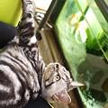 椅子から金魚を見下ろしてみる。