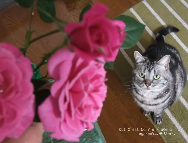 昨日のバラが満開。