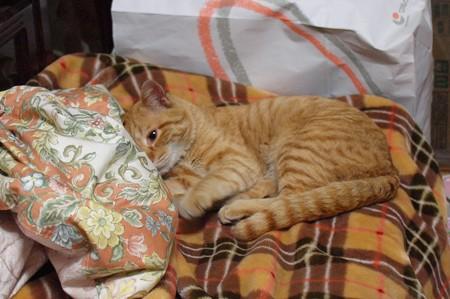2009年03月11日の茶トラのボクチン(4歳)