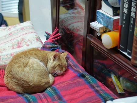 2011年03月11日の茶トラのボクチン(6歳)