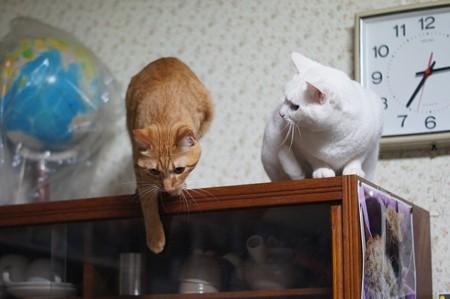 2015年04月07日のシロちゃんとトラちゃん