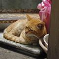 Photos: 2012年05月07日の茶トラのボクチン(ほとんど8歳)