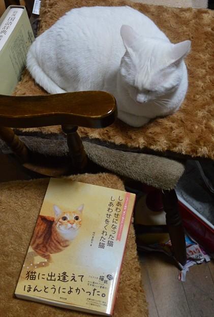 2015年5月10日のシロちゃん(2歳)