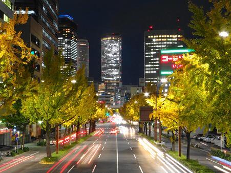 名古屋桜通りの銀杏並木