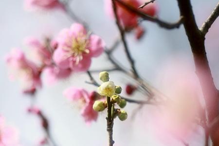 梅の花は夫々に咲きて~~