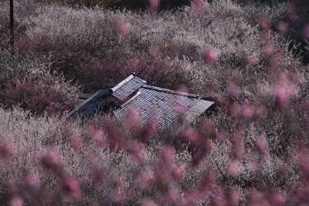 梅に瓦屋根