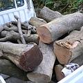 Photos: 原木の運搬