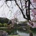 写真: 20150409徳川園