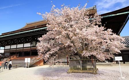 京都御所15