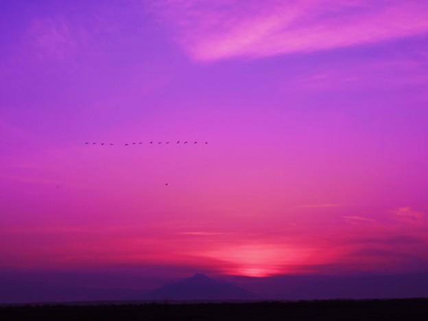 渡り鳥と利尻富士