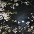 Photos: 今宵の月