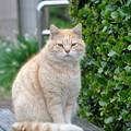 城ヶ島猫 (2)
