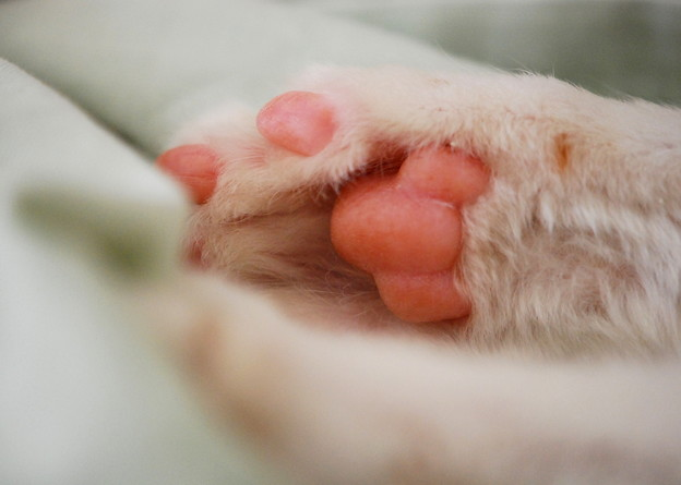 The Right Paw 3-17-12