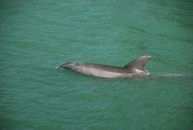 Dolphin 3-10-15