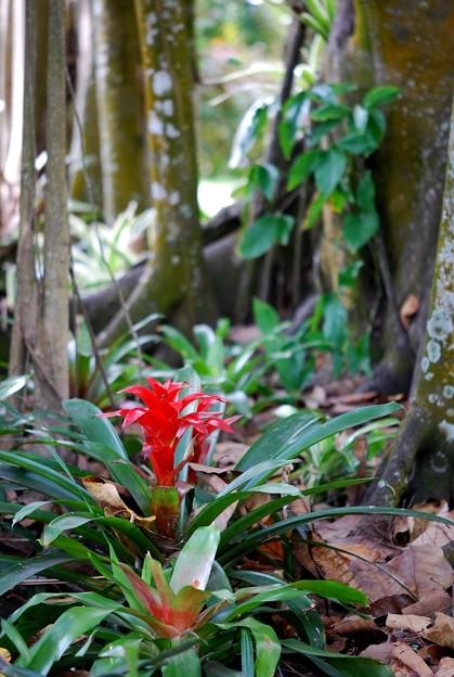 Blomeliad Gardens 3-11-15