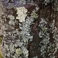 写真: Lichens 5-8-15