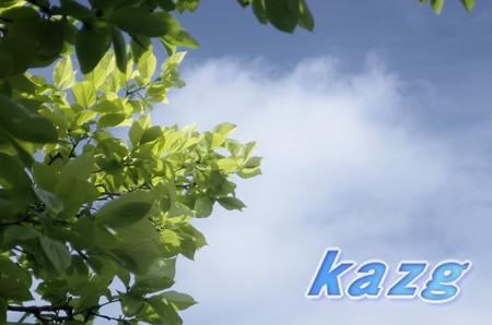 5月の柿の葉