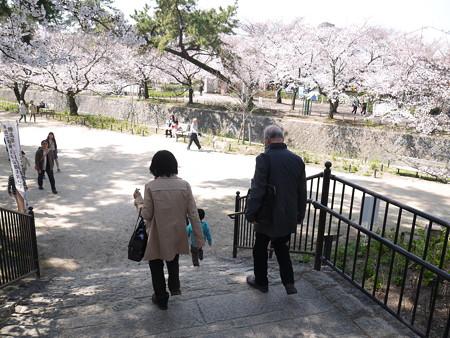 夙川桜 (3)