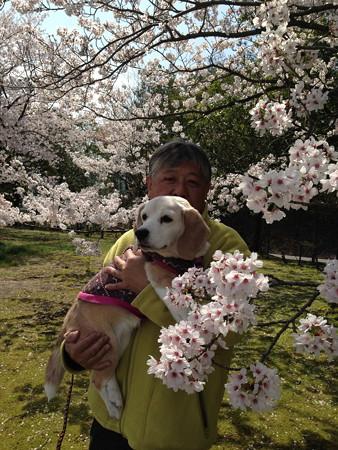 どーしても桜・うみ・おとーって撮って欲しかったんだってさ(苦笑)