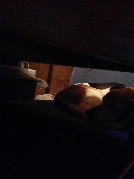 こちらは3時起きで二度寝中のマリン(早いよっ)