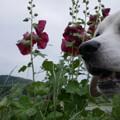 お花とうみちゃん、やっぱ女の子はお花が似合うね~