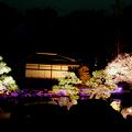 Photos: 二条城ライトアップ2