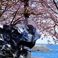 Photos: 桜と伊豆の海と