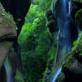 写真: 深緑の谷