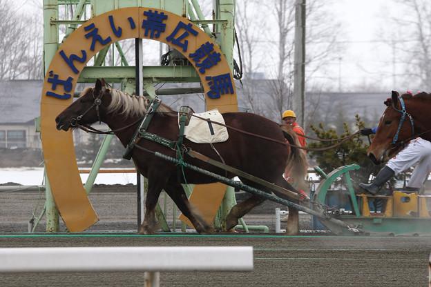 サカノタケヒメ レース(15/03/22・2R)