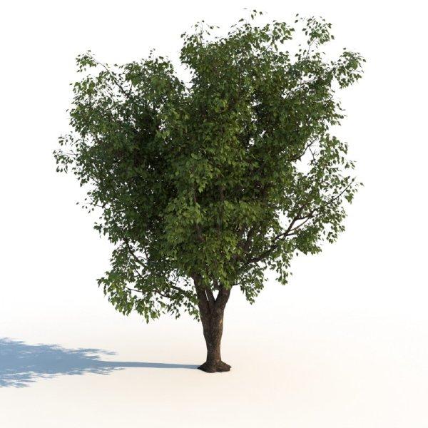 夏季树木模型