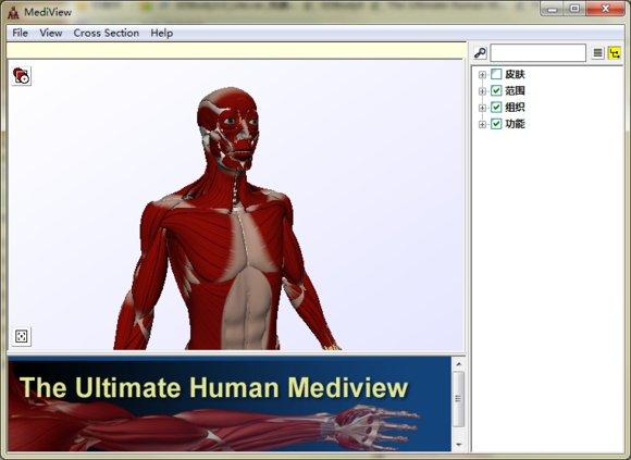 3D人体骨骼软件(MediView)绿色版