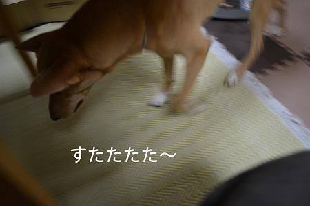 DSC_0751_2011_09_14_1