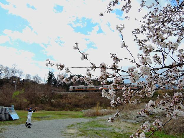 桜と飯田線#3
