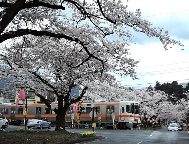 桜と飯田線#4