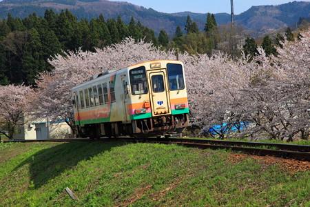 荒砥駅付近フラワー長井線と桜2