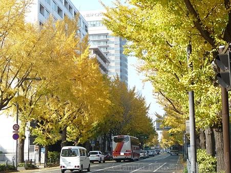111130-横浜 紅葉  山下公園通り (23)