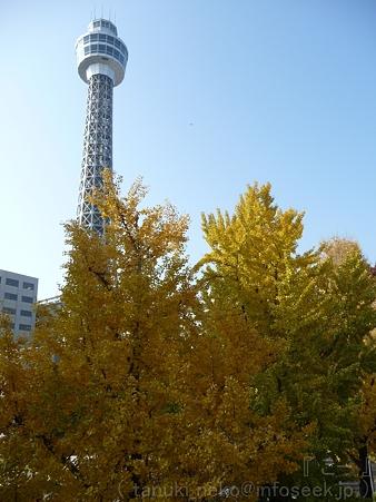 111130-横浜 紅葉  山下公園通り (32)