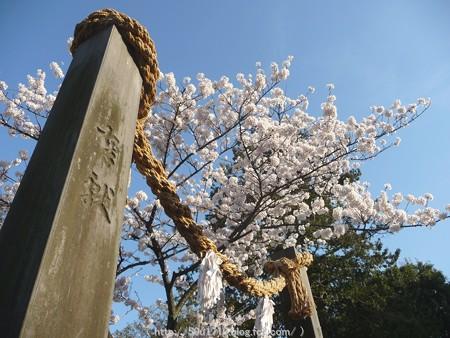 150328-伊勢山皇大神宮 (35)