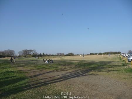 150331-桜 海軍道路 (61)